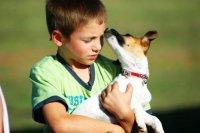 Pies na rękach chłopca